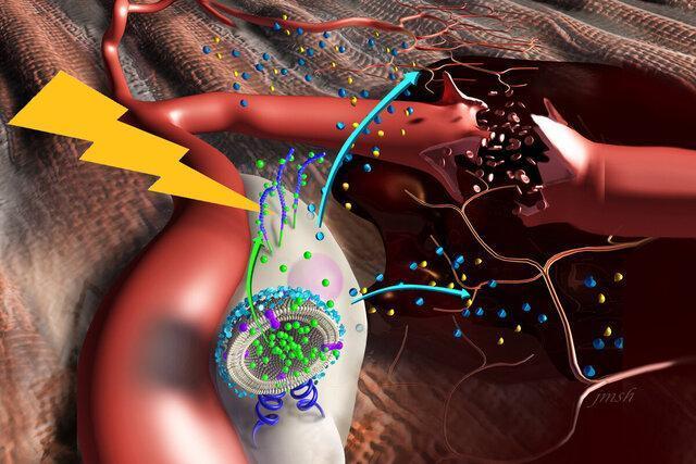ترمیم عضلات آسیب دیده با نانومحرک ها