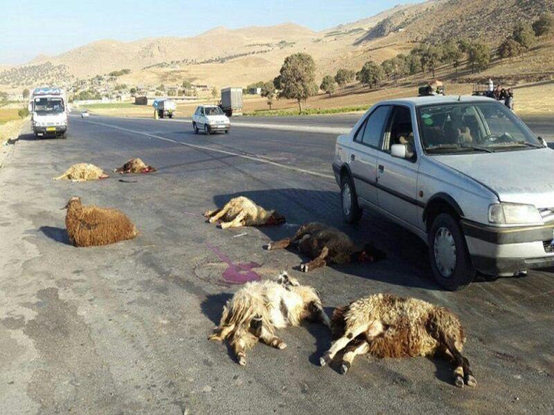 خبرنگاران 26 راس گوسفند بر اثر برخورد خودرو در سرایان تلف شدند