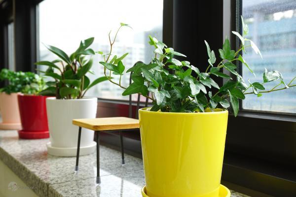 کدام گیاه های آپارتمانی داخل خانه خوب رشد می نمایند؟